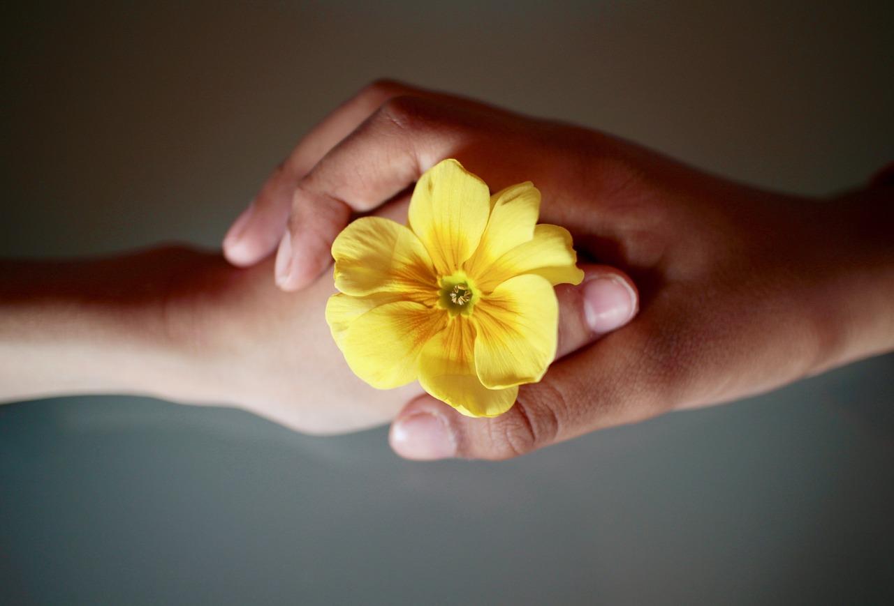 Twee handen met bloem